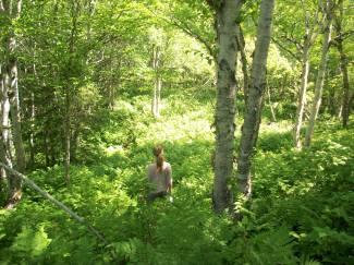 wild cove hike